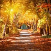Herbstfoto_web